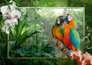 Papageien im Dschungel - 1.000 Teile Ravensburger Puzzle