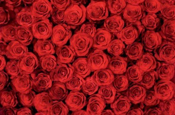 Valentinstag Geschenkidee Rosen
